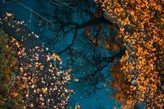 Buntes Laub, das in das dunkle Wasser mit Reflexion der Bäume schwimmt lizenzfreie stockfotos