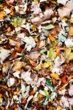 Buntes Laub des Herbstes Lizenzfreies Stockbild
