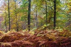 Buntes Laub des Herbstes Stockbild