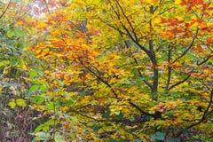 Buntes Laub des Herbstes Stockfotos