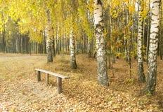 Buntes Laub im Herbstpark Stockfotos