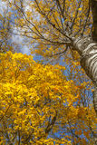 Buntes Laub im Herbstpark Lizenzfreies Stockbild
