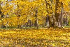 Buntes Laub im Herbstpark Stockbild