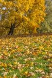 Buntes Laub im Herbstpark Stockfotografie