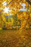 Buntes Laub im Herbstpark Stockbilder