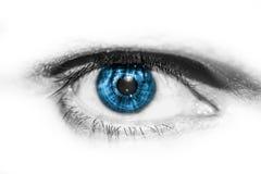 Buntes menschliches Auge der Nahaufnahme stockfotos
