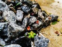 Buntes Muster von Steinen stockbilder