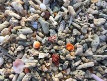 Buntes Oberteil auf korallenrotem Strand stockbild
