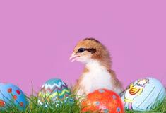 Buntes Ostern-Küken mit Eiern im Gras Stockbild