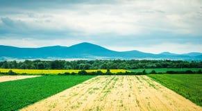 Buntes Panorama des Feldes mit Landschaft und der Berge auf dem Hintergrund Lizenzfreies Stockbild