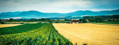 Buntes Panorama des Feldes mit Landschaft und der Berge auf dem Hintergrund Stockfotografie