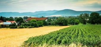 Buntes Panorama des Feldes mit Landschaft und der Berge auf dem Hintergrund Lizenzfreie Stockfotografie