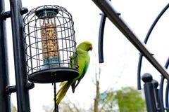 Buntes Papageienessen Lizenzfreies Stockbild