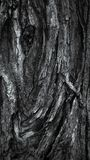 Buntes raues Baumbeschaffenheits-Nahaufnahmemakro lizenzfreie stockbilder