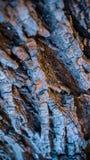 Buntes raues Baumbeschaffenheits-Nahaufnahmemakro stockfoto