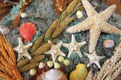 Buntes Seashells asortment mit Sternen Stockbild