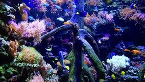 Buntes Seeunterwasserwild lebende tiere in einem Seeaquarium stock footage
