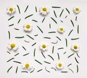 Buntes Sommermuster mit Kräutern und Blumen Lizenzfreies Stockbild
