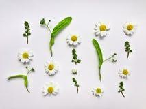 Buntes Sommermuster mit Kräutern und Blumen Flache Lage auf weißer Tabelle Stockfotos