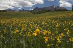 Buntes Sonnenblume-Feld stockbilder