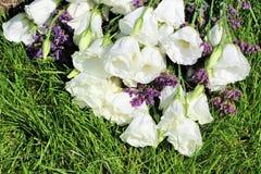 Buntes Stillleben mit Rosen auf grünem Gras Stockfoto