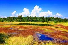 Buntes Sumpfgebiet Lizenzfreie Stockfotos