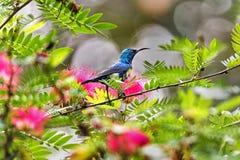 Buntes sunbird lizenzfreie stockfotografie