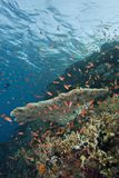Buntes tropisches korallenrotes reefscape. Stockfotografie