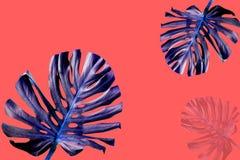 Buntes ultraviolettes Monsterblatt auf lebendem korallenrotem Sommerhintergrund lizenzfreie stockfotos