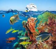 Buntes Unterwasserriff mit Koralle und Schwämmen Lizenzfreies Stockfoto