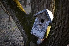 Buntes Vogelhaus auf dem Baum E stockfoto