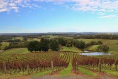 Buntes Wein orchad in Adelaide Hills Lizenzfreie Stockbilder