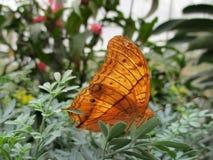 Buntglas-Flügel Stockfotografie