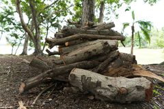 Buntvedträ i skogen arkivbild