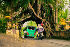 Bunut Bolong: Ficus Tree Tunnel At West Off-Beaten Track Royalty Free Stock Photography
