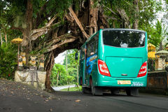 Bunut Bolong: Ficus Tree Tunnel At West Off-Beaten Track. WEST Bali retains some potential eco-tourism objects worth visiting. One of them is the Bunut Bolong Royalty Free Stock Images