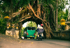 Bunut Bolong: Ficus Tree Tunnel At West Off-Beaten Track Stock Photos