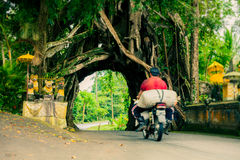 Bunut Bolong: Fikusträdtunnel på det västra Av-slog spåret Royaltyfri Foto