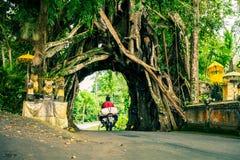 Bunut Bolong: Fikusträdtunnel på det västra Av-slog spåret Royaltyfria Bilder
