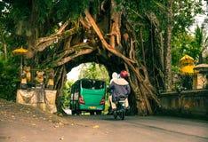 Bunut Bolong: Tunnel dell'albero di ficus alla pista Fuori battuta ovest Fotografie Stock
