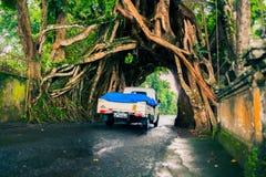 Bunut Bolong: Tunnel dell'albero di ficus alla pista Fuori battuta ovest Fotografia Stock