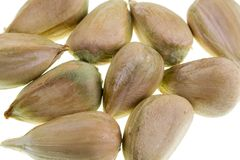 Bunya Pine Seeds. Detail of multiple bunya pine seeds Stock Photography