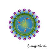 Bunya-Virus-Partikelstruktur Stockfoto