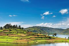 Bunyonyi lake in Uganda Royalty Free Stock Image