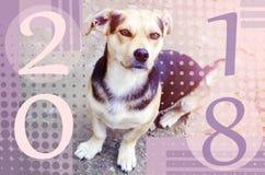 Buon anno 2018 Anno cinese del cane Concetto della cartolina d'auguri Fotografia Stock Libera da Diritti