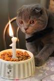 Buon compleanno! Immagini Stock