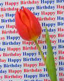 Buon compleanno: un messaggio speciale con un tulipano. Fotografia Stock Libera da Diritti