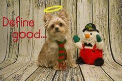 Buon cucciolo Fotografia Stock Libera da Diritti