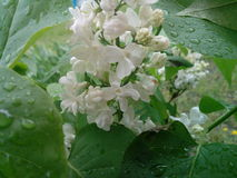 Buon flower3 Fotografie Stock Libere da Diritti