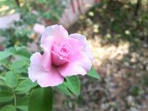 buon giovane fiore immagine stock